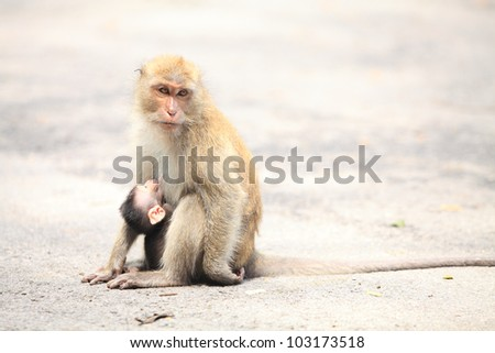 mother and baby monky