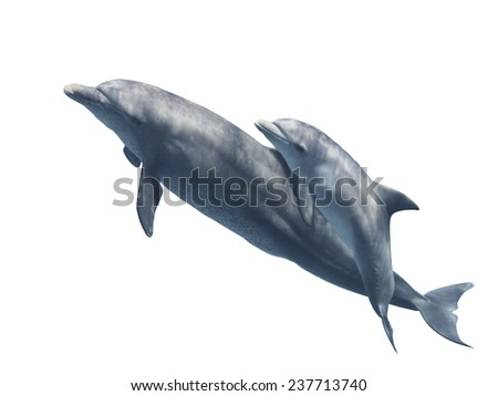 Mother and baby swimming bottlenose dolphins  isolated on the white background, selective focus