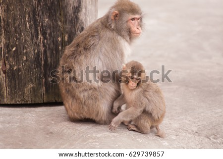 Mother and child Monkey together