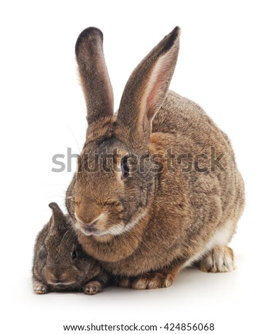Mother and children rabbit on a white background.