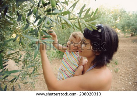 mother and daughter picking olive from tree - stock photo