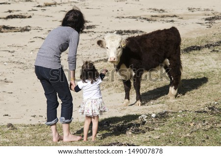 Mother and her daughter play with Ayrshire cattle in a dairy farm. - stock photo
