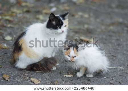Mother and kitten - two three-colored cat - stock photo