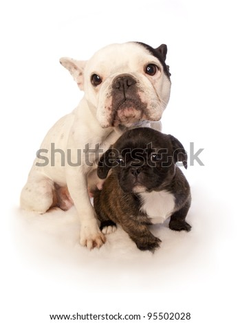 Mother and puppy isolated on white background - stock photo