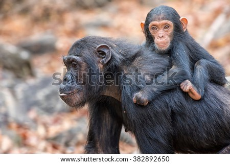 mother and young - stock photo