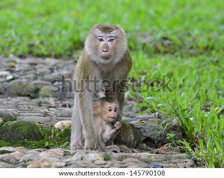 Mother and young monkey in each other hugs with love and care