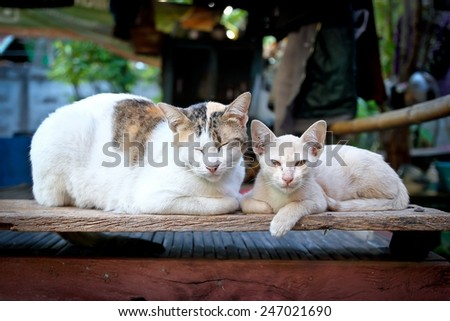 mother cat and kitten - stock photo