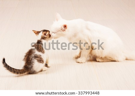 mother cat and  kittens - stock photo