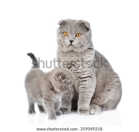 Mother cat and little kitten sitting together. isolated on white background - stock photo