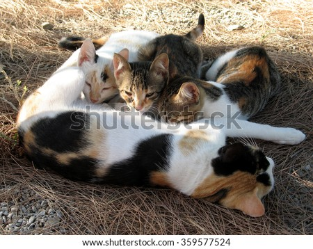 Mother cat breast feeding with kittens in Crete - stock photo