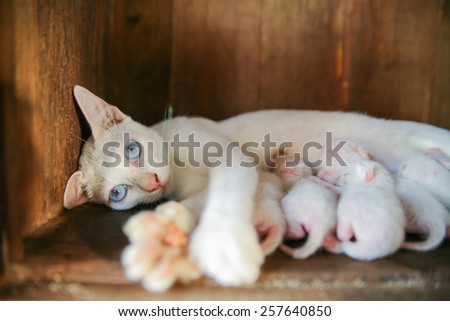Mother cat feeding in the box. - stock photo
