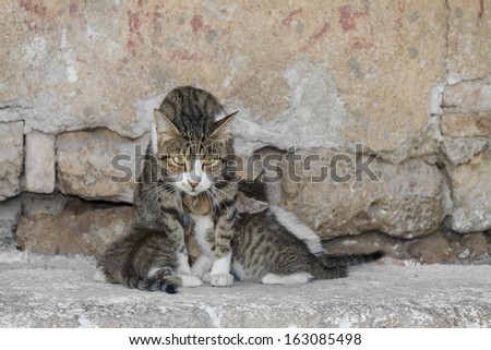 Mother Cat Feeding Kittens Outdoor - stock photo