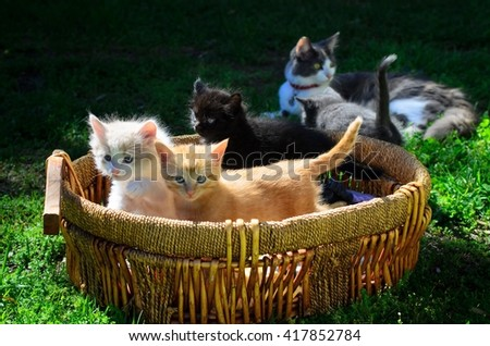 Mother cat with a basket of her kittens. - stock photo