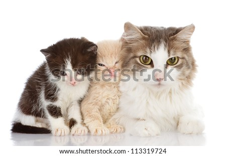 Mother cat with her kittens. isolated on white background - stock photo