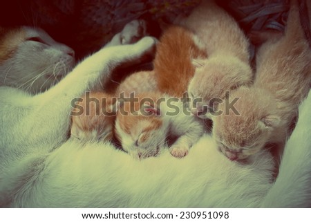 mother cat with kittens sleeping  - stock photo