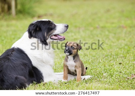 Mother dog sitting with her puppy in the yard