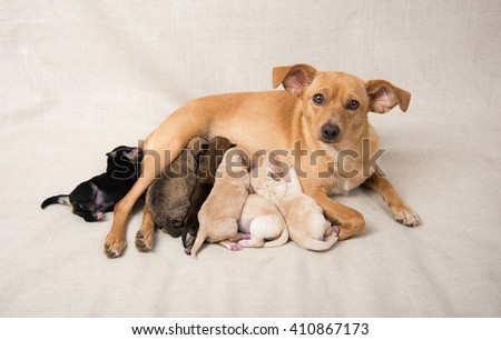 Mother Dog with Litter of Newborn Puppies
