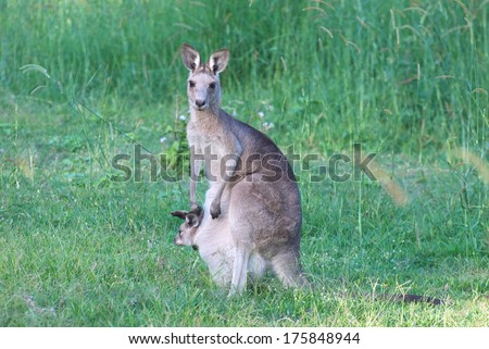 Northy Sona Sladeckova S Quot Animals Quot Set On Shutterstock