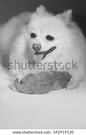 mother love, dog in a monotone - stock photo