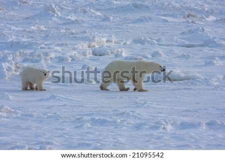 Mother polar bear and cub in the arctic - stock photo