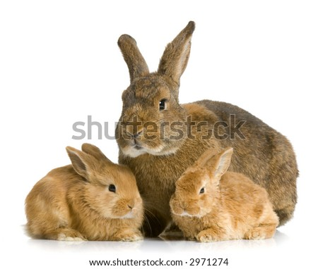 Mother Rabbit with her new born bunny in front of a white background - stock photo