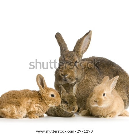 Mother Rabbit with her new born bunny in front of a white background