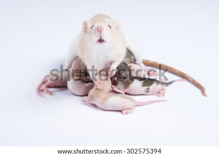 Mother rats were fed breast milk of rats children