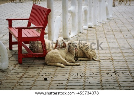 Mother sheep and her kid relaxing near the wooden bench, soft and selective focus - stock photo