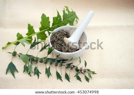 motherwort fresh and dried herbs in a mortar - stock photo