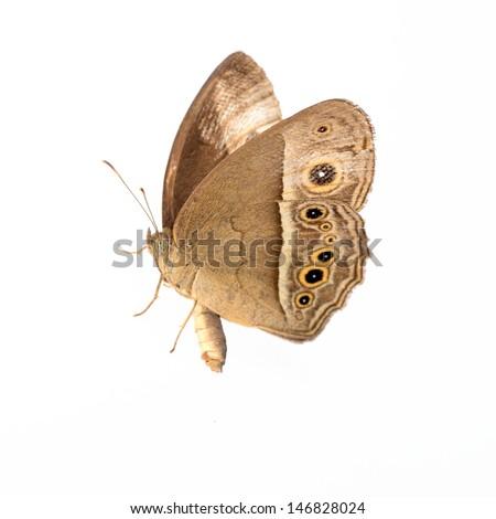 Moths - stock photo