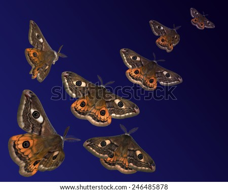 Moths (Saturnia pavoniella) flying in the night - stock photo