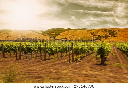 Motion blur moving past Californian vineyard and rows of vines with filters - stock photo