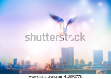Motion Blur of Dove fly in the air with wings wide over building, peace and freedom over big city concept - stock photo