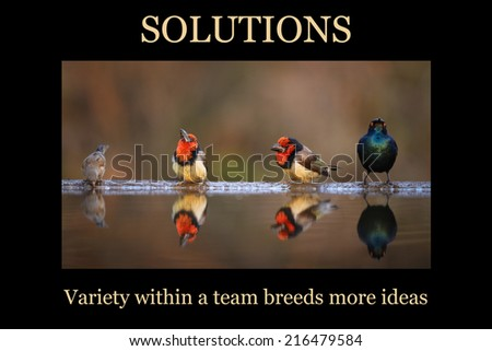 Motivational poster - SOLUTIONS: variety of birds at edge of pond - stock photo