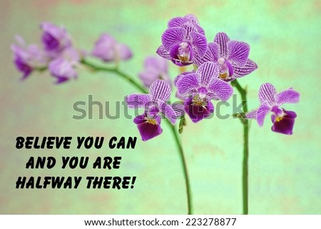 motivational quote about life  with a  beautiful purple orchid on a green background