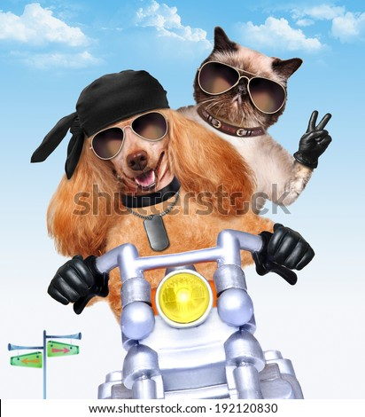 motorbike couple at speed - stock photo