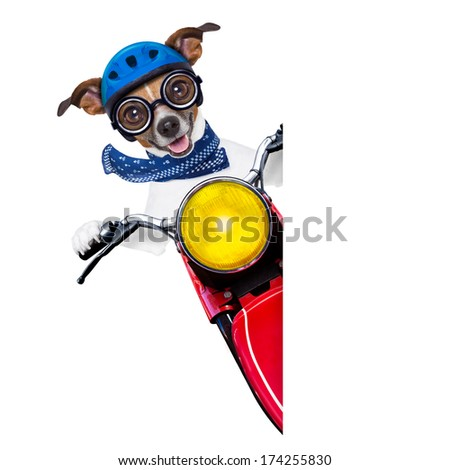 motorbike dog beside a blank white banner - stock photo