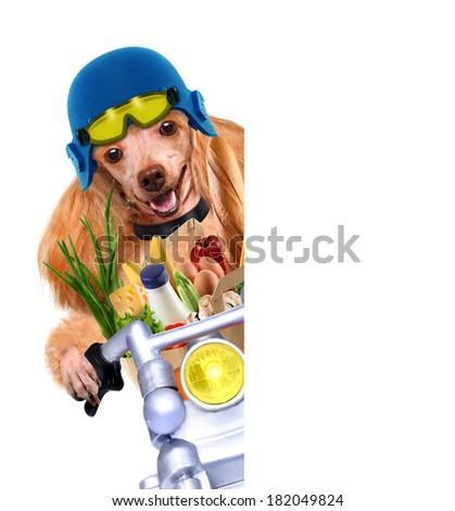 motorbike dog the white banners - stock photo