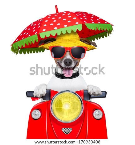 motorcycle dog summer dog driving a motorbike with umbrella - stock photo
