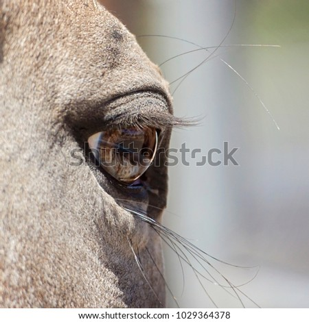 Mottled Horse Eye