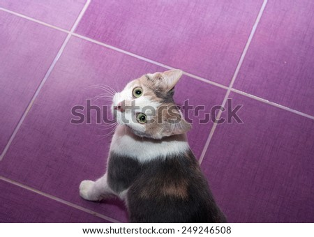 Mottled purple cat stands on the purple floor