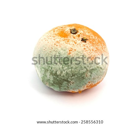 Mouldy Fruit - stock photo