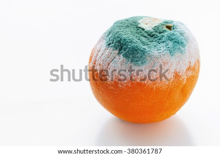 Mouldy orange on white background