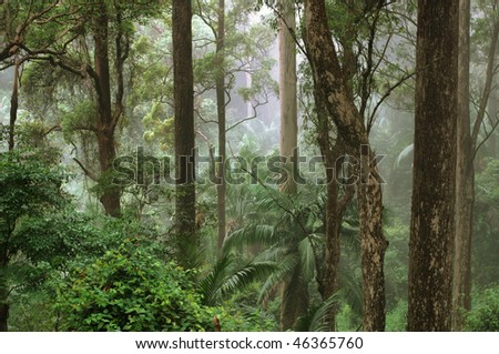 Mount Glorious, near Brisbane, Queensland, Australia - stock photo