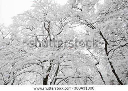 Mount Huangshan snow - stock photo