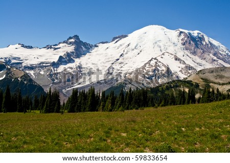 Mount Rainier on a clear beautiful sunny day behind a meadow of wildflowers.
