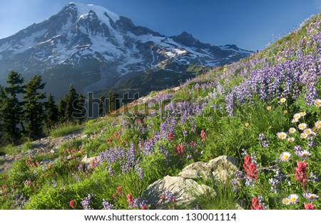 Mount Rainier Wildlflowers seen from Plumber Peak  \ Mount Rainier Vantage - stock photo