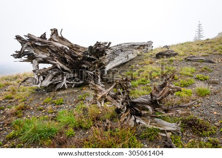 Mount St. Helens - stock photo