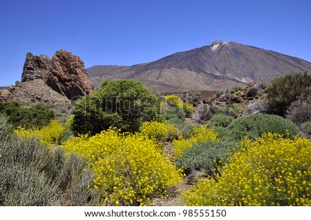 Mount Teide or, in Spanish, Pico del Teide (3718m), is a volcano at Tenerife in the Spanish Canary Islands. Rocks of lava and Shrub yellow flowers (Descurainia Bourgeauana) in foreground - stock photo