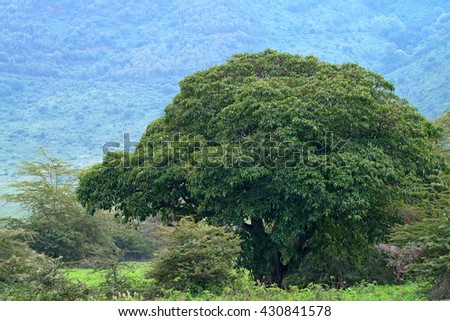 Mountain african forest with acacia and lush bushes - stock photo